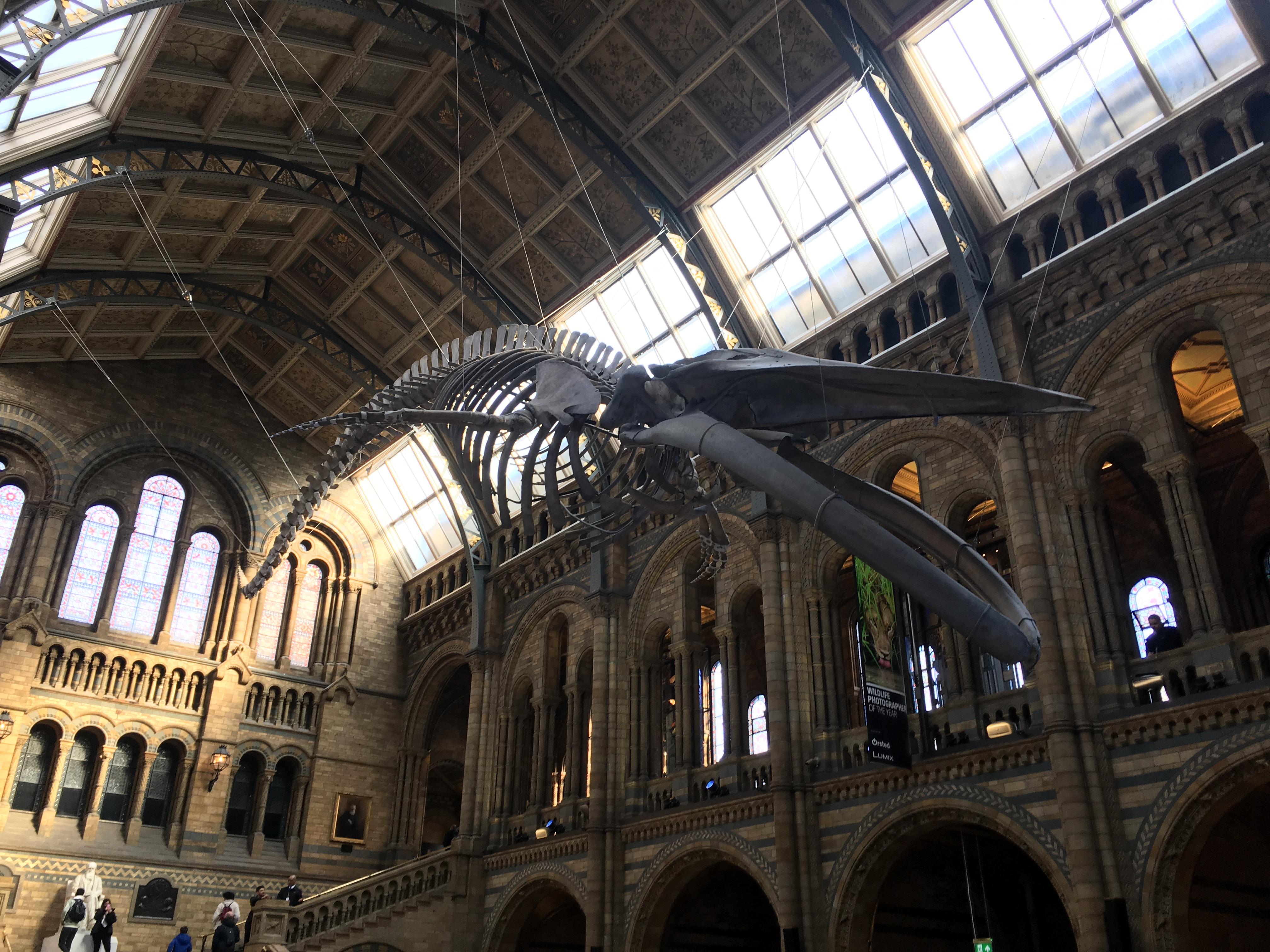 esquelet d'una ballena