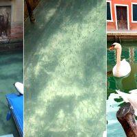 portada-cisnes-cientos-peces-vuelven-canales-venecia-luego-cuarentena-italia